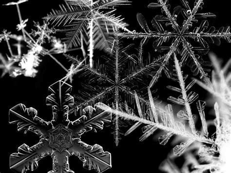 Snowflake Background Black And White by 23 Snowflakes Wallpapers Snow Backgrounds Pictures