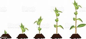 Five Stage Diagram Showing Plant Growth Sequence Stock
