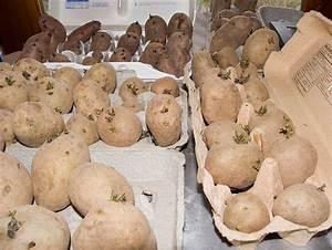 Boite A Pomme De Terre : comment faire germer les plants de pommes de terre ~ Teatrodelosmanantiales.com Idées de Décoration