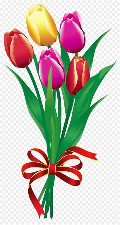 Clip Flower Clipart Tulip Bouquet Tulips Kisspng