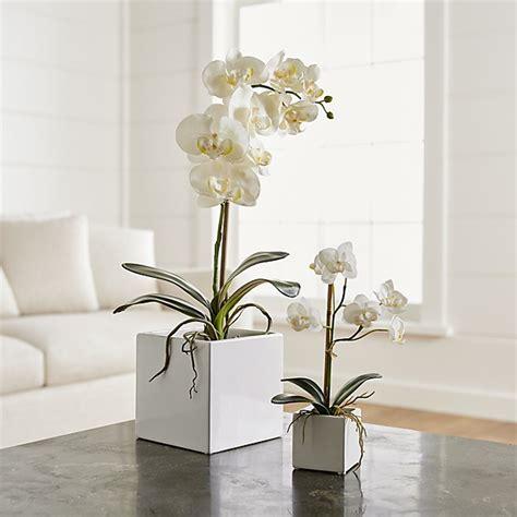 faux orchids crate  barrel