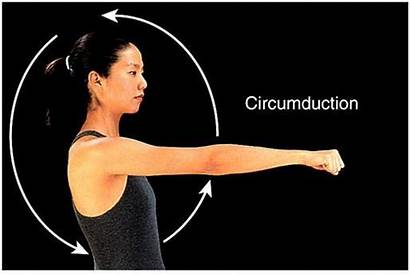 Joints Movement Abduction Adduction Shoulder Flexion Circumduction