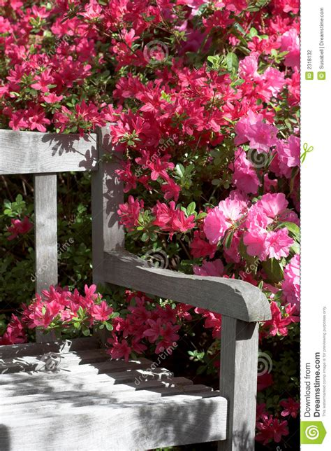garden bench  flowers stock photography image