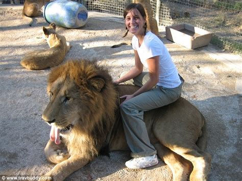 zoo lion lujan animals animal argentina sit lions dangerous most cages ride bizarre petting funny nanny wild cute animated visitors