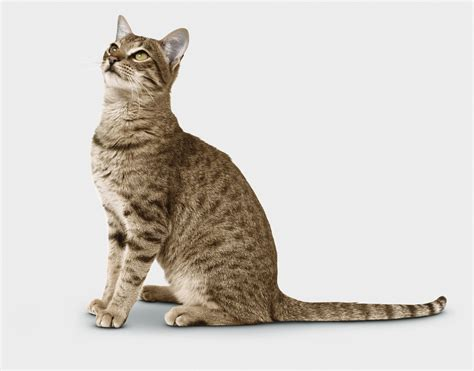 Signs Your Cat Is Healthy
