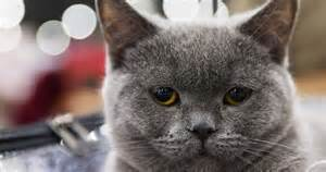 world s cutest cat these are the world s cutest cats at this year s