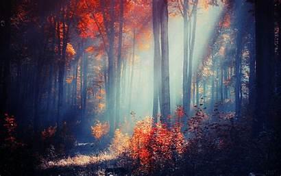 Desktop Computer Wallpapers Forest Autumn Explore Pc