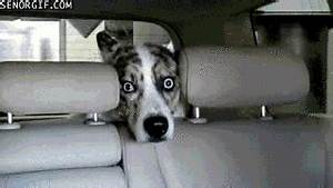Scared Car Wash GIF by Cheezburger - Find & Share on GIPHY