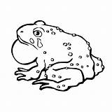 Toad Coloring Pages Captain Printable Print Animal Mario Sheet Animals 600px 52kb Tracker Template sketch template