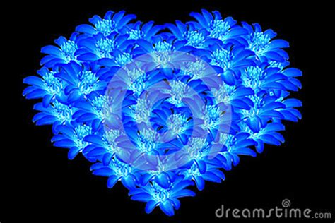 beautiful blue flowers heart shaped  royalty  stock