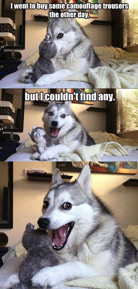 bad pun husky life  dogs