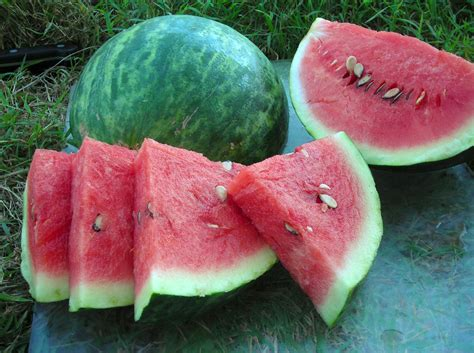 Wilson Sweet Watermelon, 2 g : Southern Exposure Seed ...