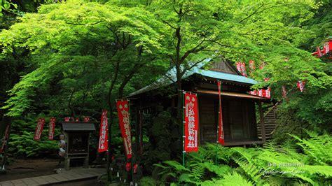 佐助稲荷神社 新緑の拝殿の壁紙 1920x1080