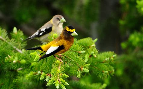 birds in a tree wallpapers and images wallpapers