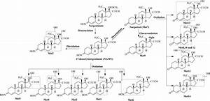 Metabolite Identification, Reaction Phenotyping, and Retrospective Drug-Drug Interaction ... Estradiol and Norgestimate