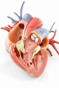 Label Heart Structure