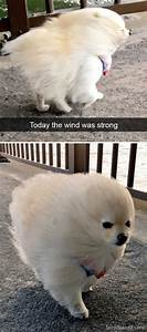 191 Hilarious Dog Snapchats That Are Impawsible Not To ...