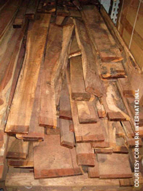olive wood  branches    wide woodshop news