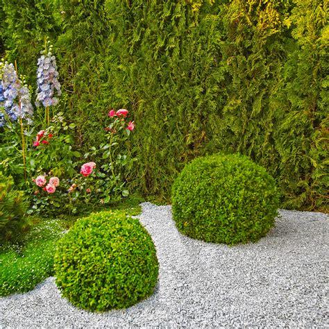 Kiesbeete Im Garten by Im Kiesbeet 187 Pflanz Und Pflegetipps