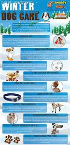 winter dog care tipsographic With winter dog care