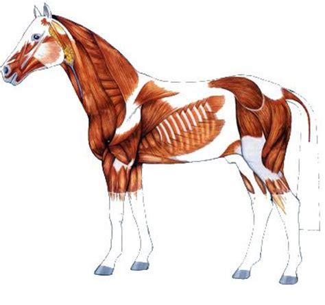 Muskulatur Aufbauen Pferd