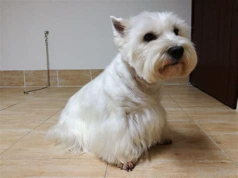 Unas suņu frizētava Valmierā | Infozoo - dzīvnieku frizētavas Valmierā