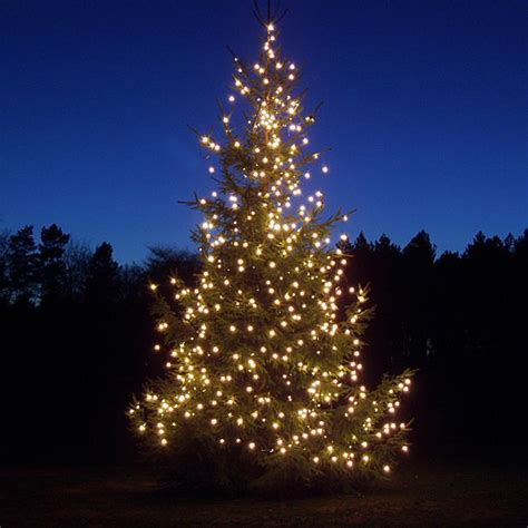 real christmas trees glasgow where to buy real christmas trees in and around glasgow 4259