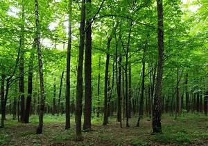 Fototapete Tapete Wald Bume Natur 360x254cm