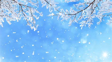 Background Images Snow by Wallpaper Winter Snow Snowfall Branches 5k Nature 3846