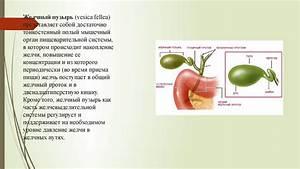 Лечение печени и желчного пузыря лекарственными препаратами