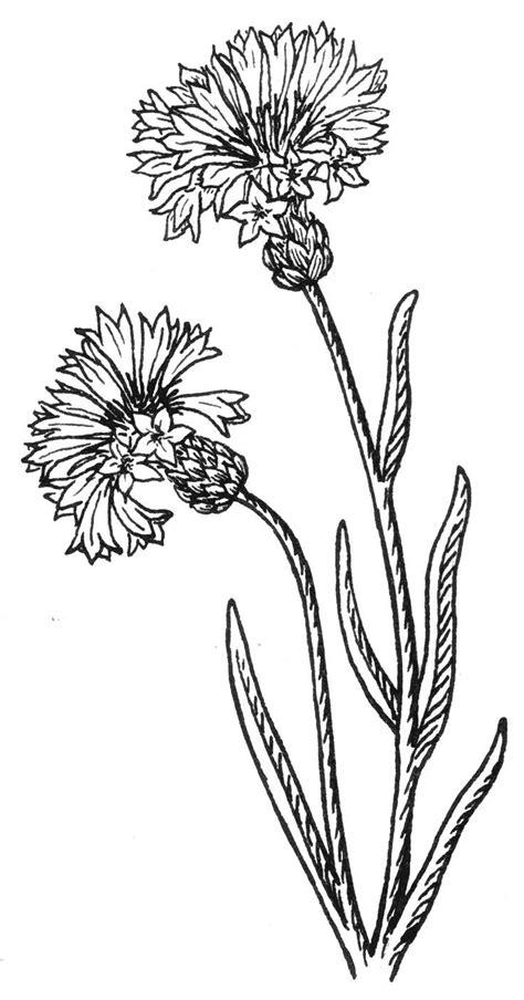 Tattoo Ideas, Buttons Drawing, Wildflower Tattoo, Google