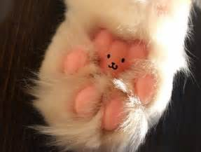cat s paw wednesday 22 04 2015 celebrate national jelly bean day