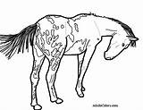 Coloring Horse Pages Appaloosa Pinto Train Wagon Spotted Trail Pony Drawing Gypsy Vanner Printable Oregon Getcolorings Getdrawings Pick Colorings sketch template