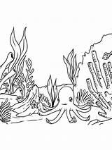 Seaweed Coloring Mycoloring Printable sketch template