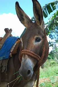 How much is a donkey