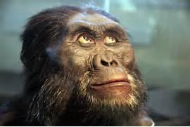 File Australopithecus ...