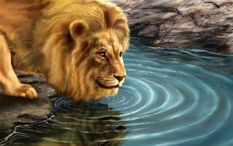 lion high definition wallpaper