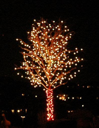 small outdoor trees with lights my web value