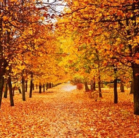 autumn scenery vinyl photography backdrop tree  fall leaves view background studio props sale