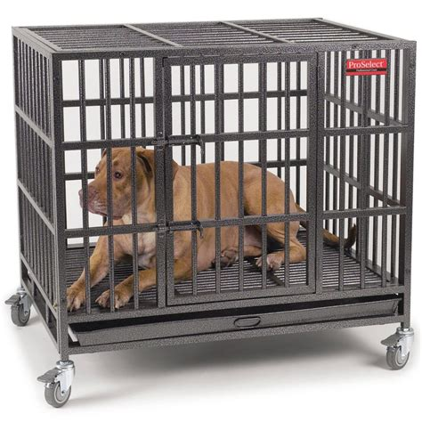 proselect empire dog crate review dogs recommend