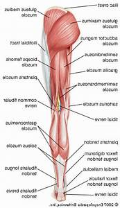 Female Anatomy Human Stomach