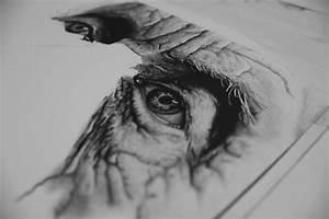 Pencil Drawings: Pencil Drawings In Graphite