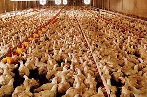 Monoprix St Germain En Laye : monoprix lutte contre l levage intensif des poules les ~ Melissatoandfro.com Idées de Décoration