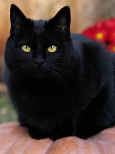 free black cats wallpapercute black cat