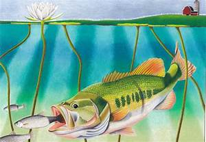 state fish student contest promotes conservation