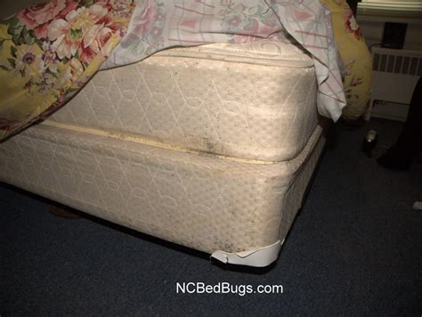 what does bed bugs look like on mattresses what to look for in a bed home design