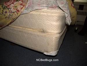 dr bed bug free education material on bed bugs cimex With bed bug free mattress