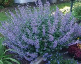 Low Flowering Perennial Plants