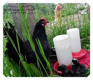 Have you ever been to a chicken yard sale? - A Hen's Nest ...