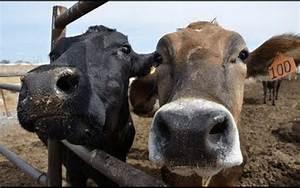 Animal En G : contin a la crueldad animal en los rastros de jalisco el ~ Melissatoandfro.com Idées de Décoration